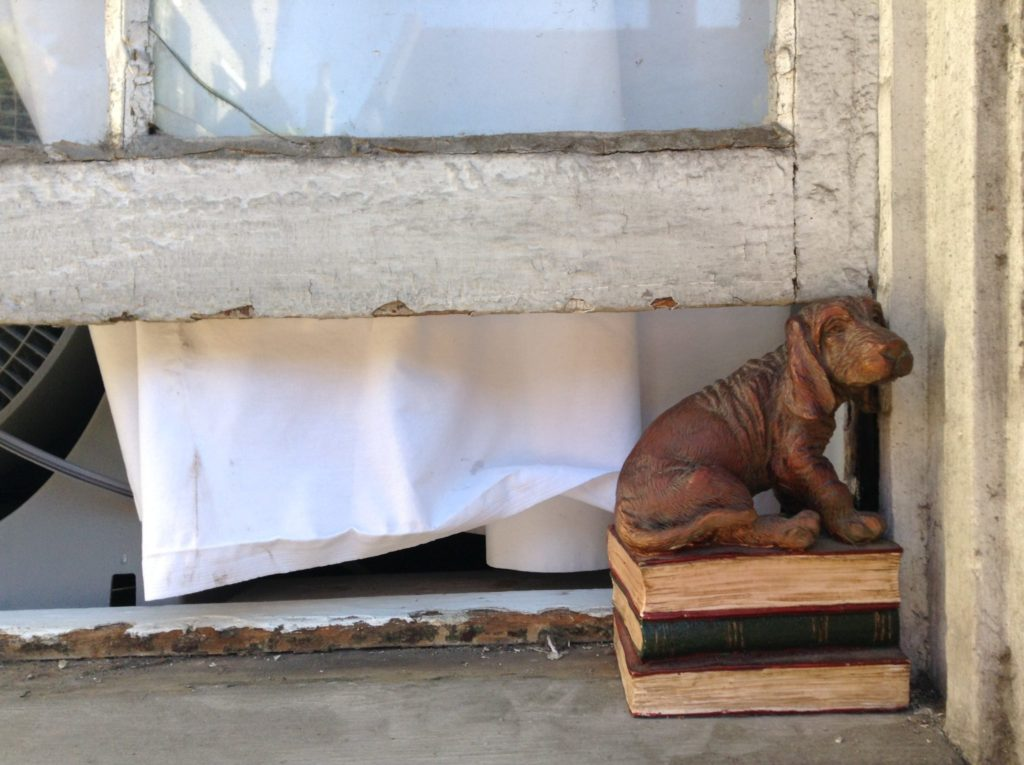 Bassett, Hush Puppy, French Quarter, New Orleans, USA, Dog, Fenster