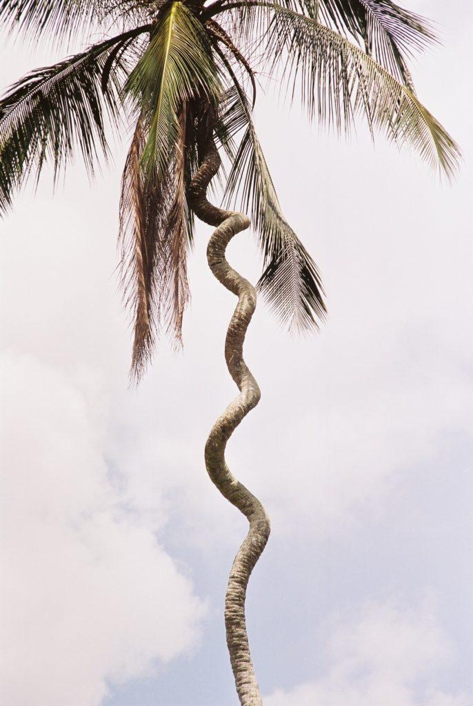 Zanzibar, Palme, Tanzania