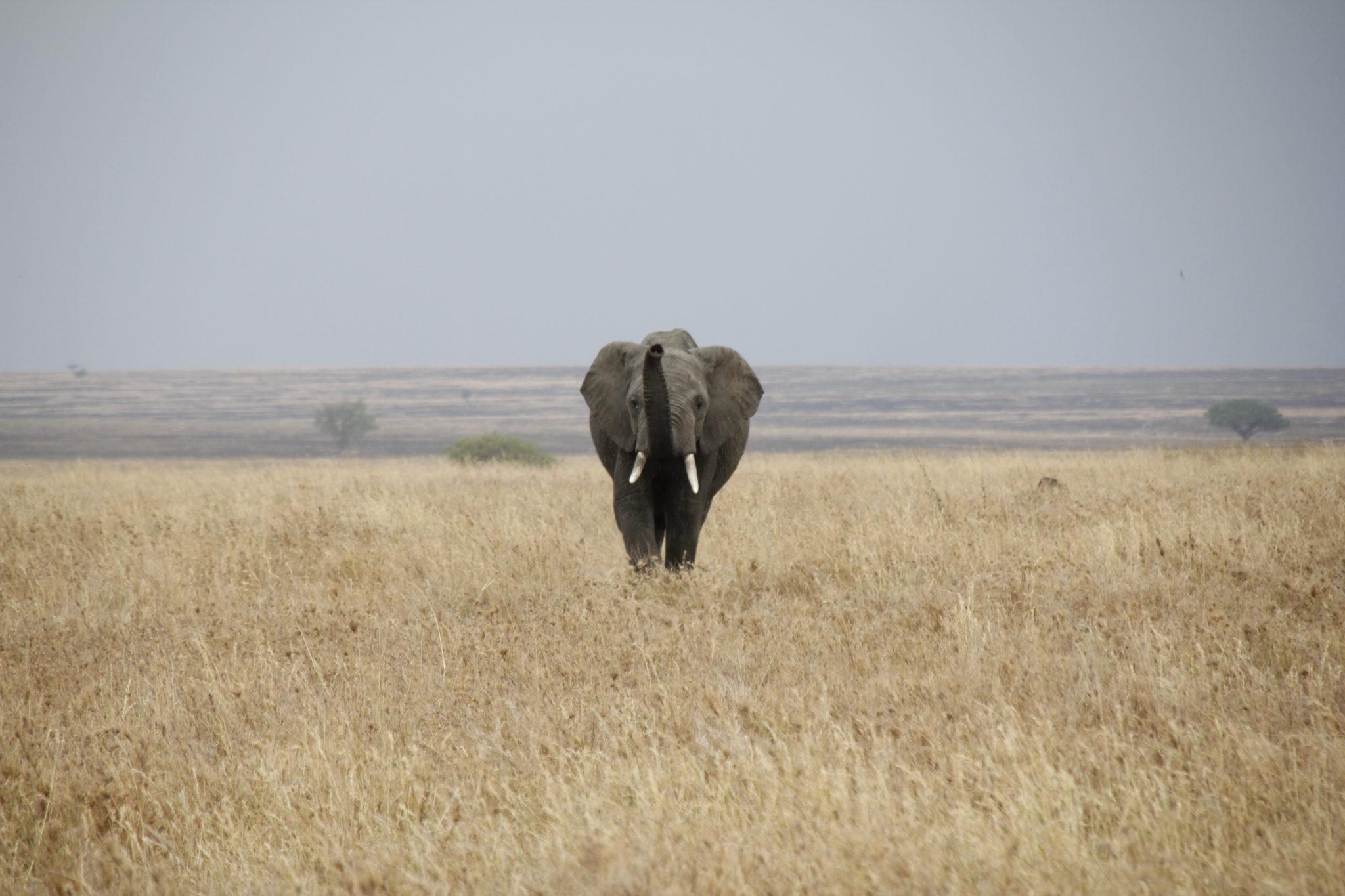 Serengeti, Tanzania, Elephant