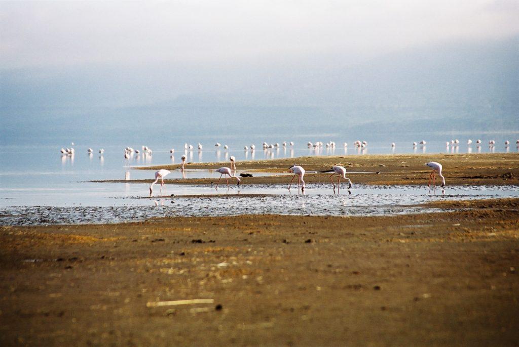 Serengeti, Tanzania, Flamingos