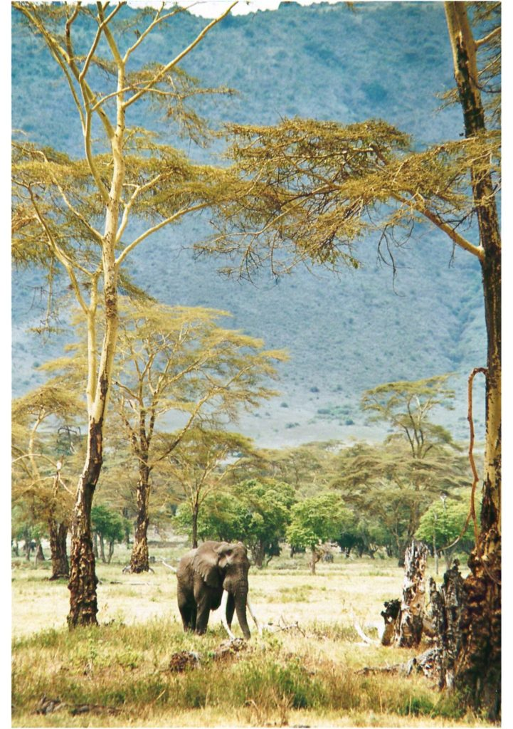 Ngorongoro, Tanzania, Elephant