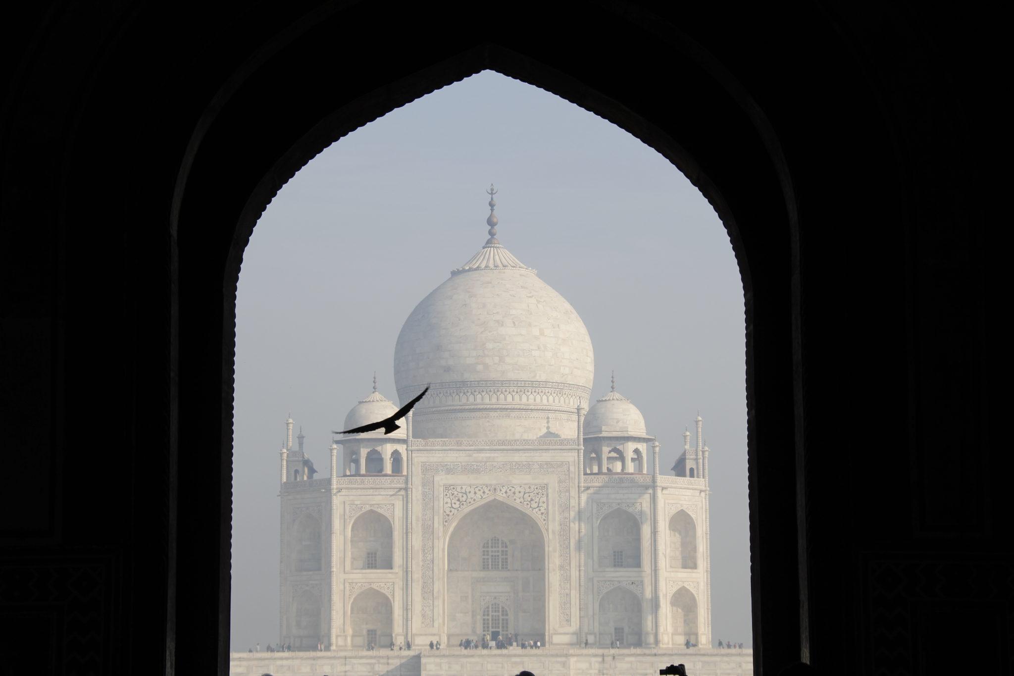 Taj Mahal, Vogel, Eingangstor, Entrance, Agra
